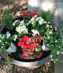 planning flower pot