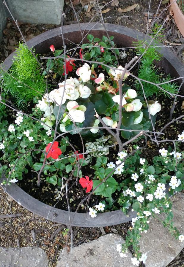 squirrel proof flower pot